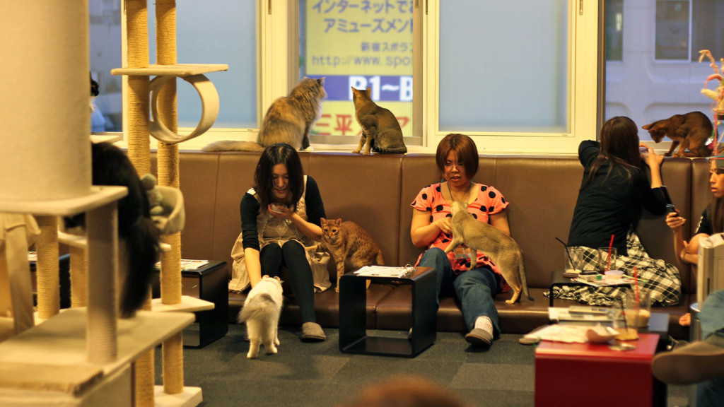 Image of two ladies playing with cats in the cat cafe