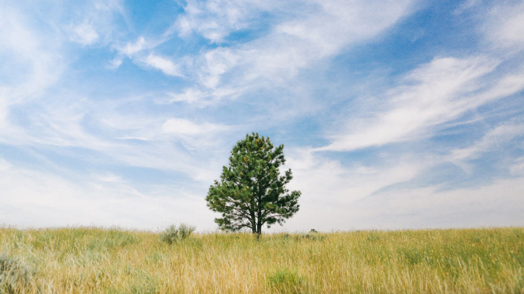 Ways to lead a greener life - image of a solitary tree in a field