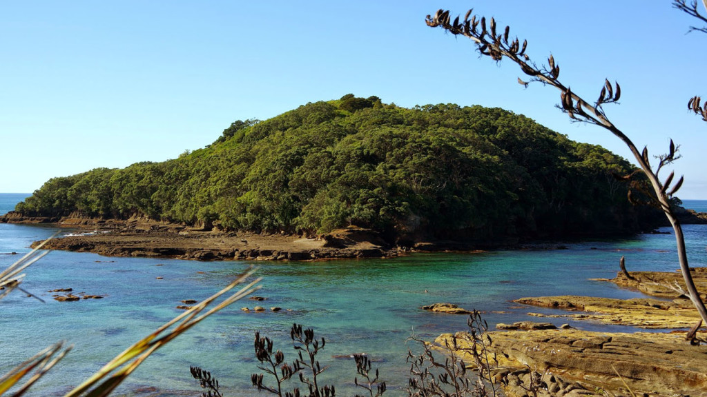 Image of an island in the Tawharanui Marine Reserve