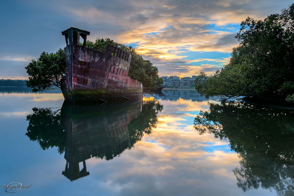 Image of Floating forest ship