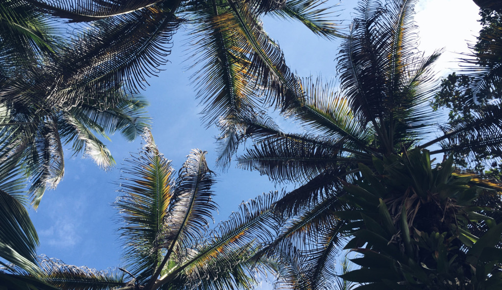 Christmas gifts for people who love to travel - image of palm trees