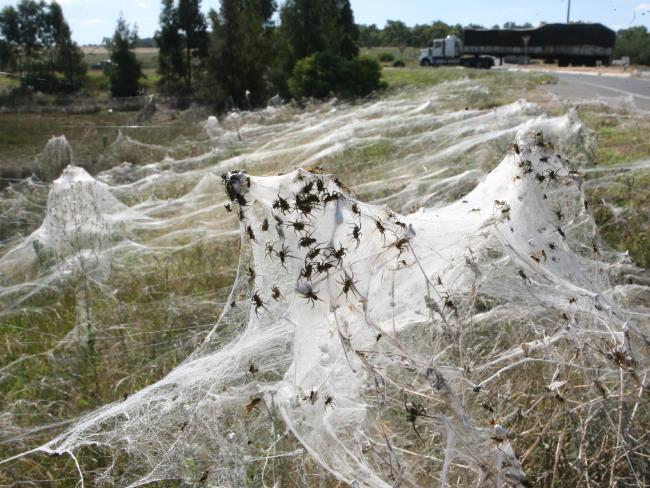 Craziest things to come out of Australia - spiders