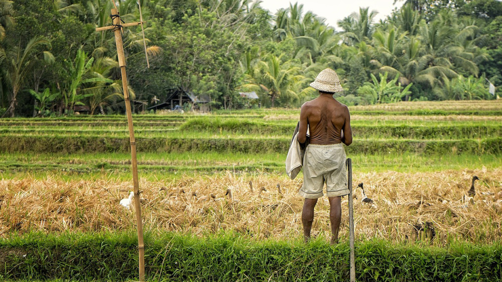 romantic travel destinations - image of man in rice paddies