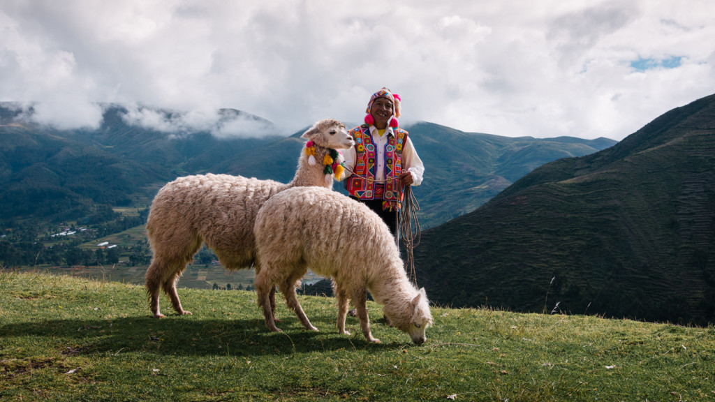 adventure activities in the sacred valley - llama in the sacred valley