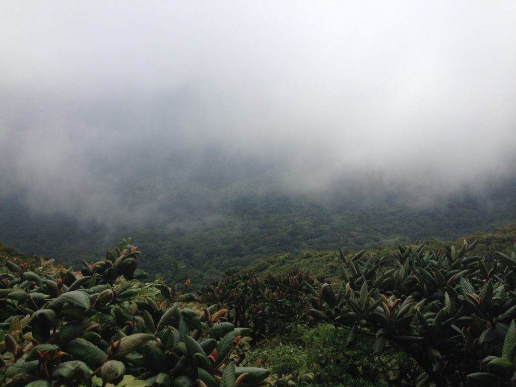 Costa rica fog sustainable living
