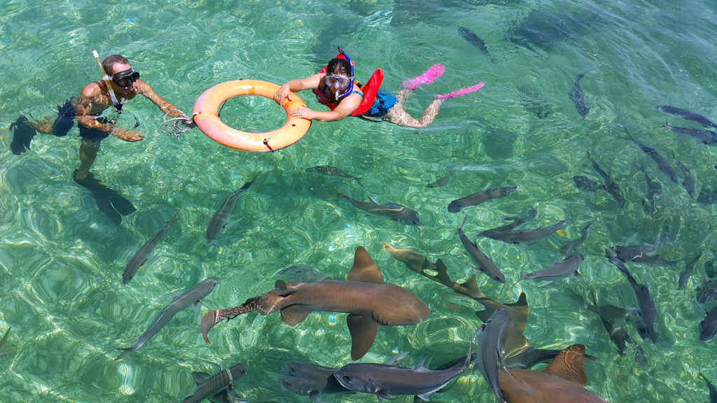 snorkelling with sharks at the belize barrier reef