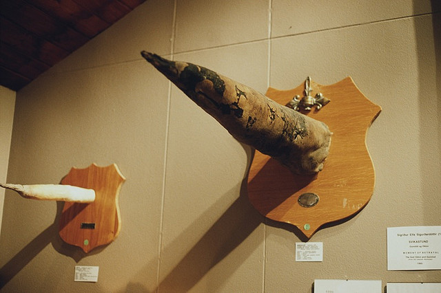 wooden penis sculptures at the iceland penis museum