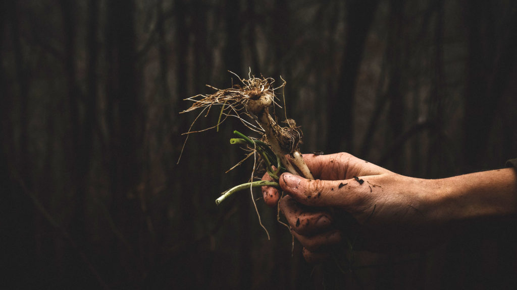 hand-holding-weeds