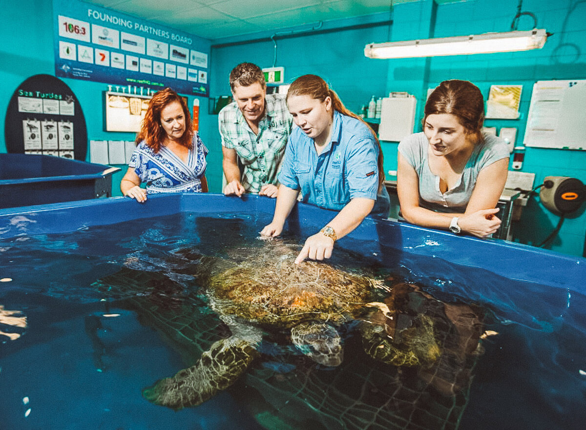 turtle-hospital-reef-hq-experience