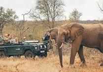 Learn to be a Safari Guide in Kruger National Park - Detour Mini Adventure